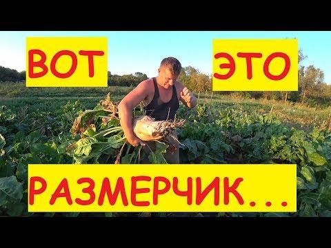 Про АВТОКЛАВ / Урожай свеклы 2019 / Вечер в деревне
