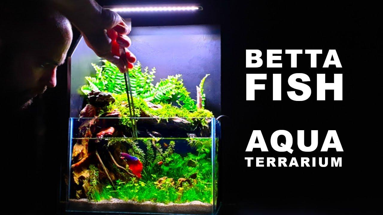 How To Betta Fish Aquaterrarium No Ferts No Co2 Aquascape Youtube