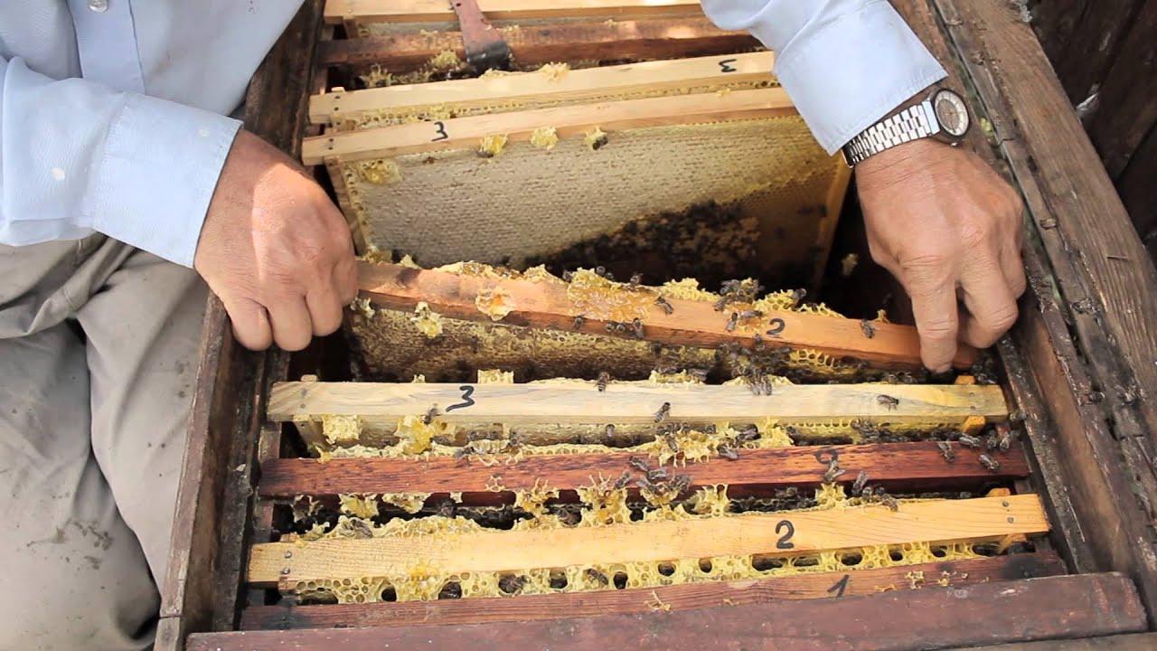 Покупайте лекарства для пчелы по лучшим ценам в интернет-магазине укрби. Быстрая доставка по всей украине. Звоните сейчас +38 (096) 041-73 79.