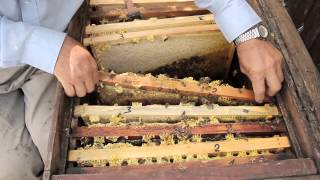 Продам пчел и маток бакфаст и карника(продам маток и пчел 0506689656., 2013-11-21T19:11:33.000Z)