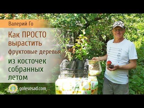 Вопрос: Косточки из фруктов,ягод закапываю в земле в парке,может вырасти что-то?