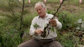 Peter Andrews on Weeds