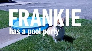 Frankie Has A Pool Party