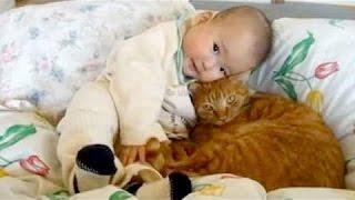 Niedlichen Katzen Kuscheln Und Spielen Mit Babys - Cat