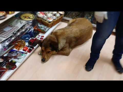 Athens Flea Market Shopping - FULL VIDEO TOUR (Monastiraki, Greece)