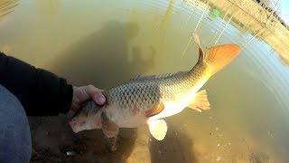 Зарыбление своего пруда /The run of fish in your pond