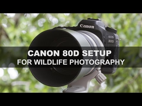 Canon 80D - Setup for Wildlife Photography
