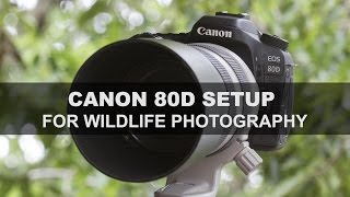 canon 80d setup for wildlife photography