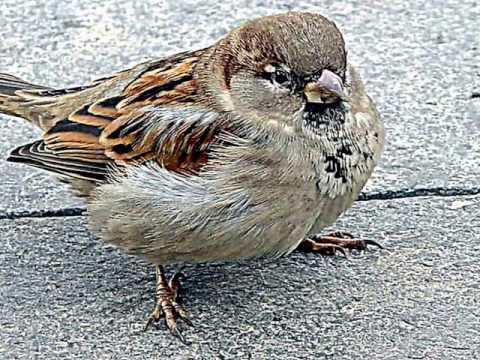 Вопрос: Названия каких птиц начинаются с буквы З?