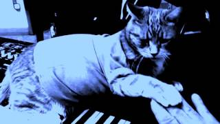 "Keyboard Cat ""HIND PAW, 1 note DUET"""