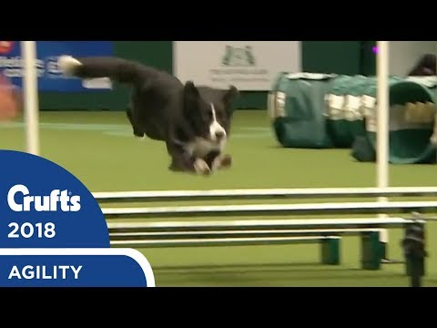Agility - Championship Round 1 (Jumping) Part 2 | Crufts 2018