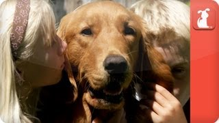 Healing Power of Pets: Family finds comfort in service dog