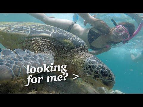 SWIMMING WITH SEA TURTLES! Apo Island, Philippines