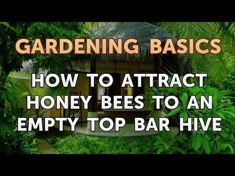 How to Attract Honey Bees to an Empty Top Bar Hive