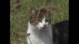 Niebezpieczne koty
