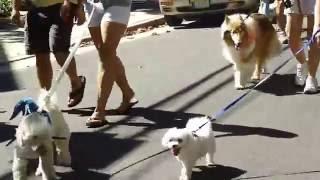Cape May Pet Parade