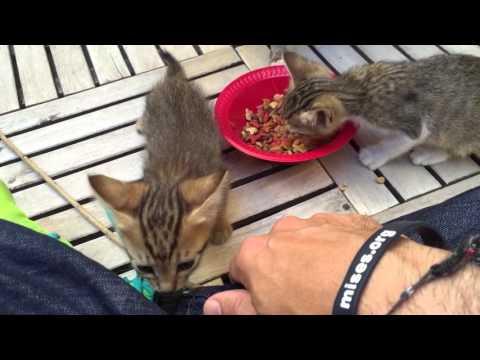 Cats in Dubai