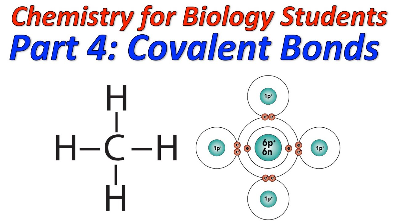 Basic Chemistry For Biology Part 4  Covalent Bonding And