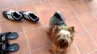 В доме чисто, потому что собака всегда вытирает ноги)))