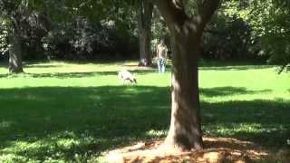 World Class Dog Kennels, Dog Boarding, Crystal Lake, Il.