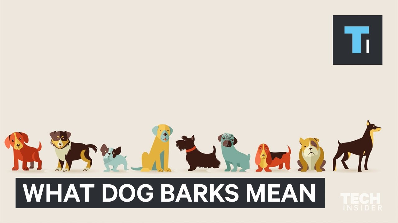 Understanding the Sounds Your Dog Makes | LoveToKnow