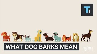 Your dog has different kinds of barks — here's why