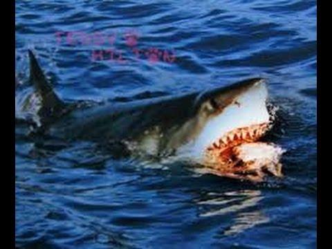 Top 10 p che d 39 un grand requin blanc youtube - Dessiner un requin blanc ...