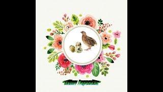 Рецепт откормочного комбикорма для перепелов,бройлеров,цыплят.