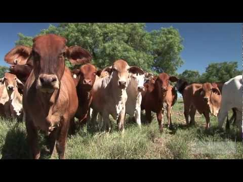 Managing Mitchell Grass - The Wongan Experience