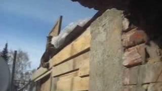 Кошка лезет к гнезду