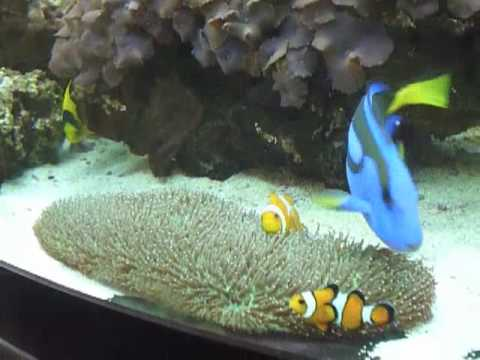 Real Life Nemo - YouTube