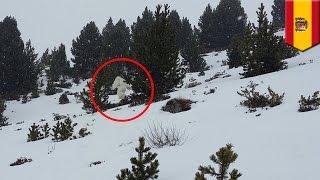 Yeti, bigfoot, sasquatch, o abominable snowman nakita sa bundok — TomoNews