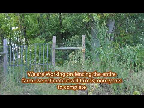 Stopping Deer Damage at a Bucks County Tree Farm
