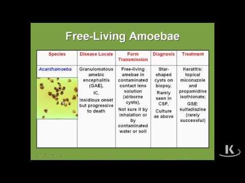 Free Living Amoebae