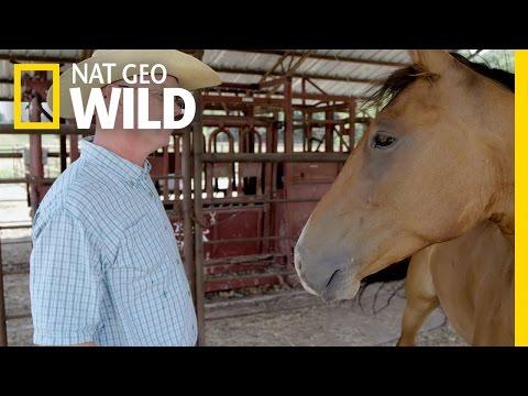 The Horse Whisperer | Mustang Millionaire