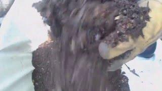 Composting Using a Sun/Snow Joe  SDJ616 Leaf Mulcher/Shredder