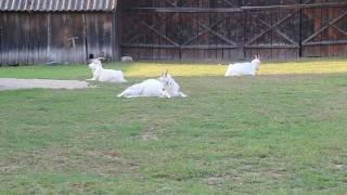 Kozy karpackie - na relaksie