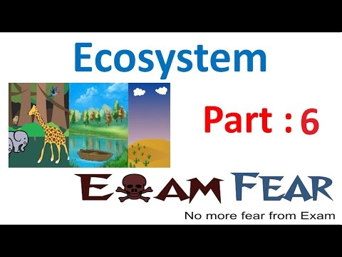 Biology Ecosystem part 6 (Primary & Secondary Productivity) class 12 XII thumbnail