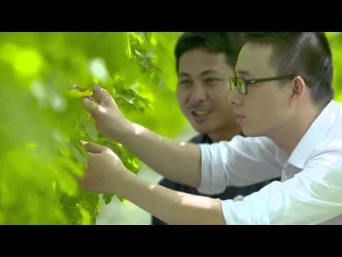 Quy trình sản xuất rau sạch VinEco