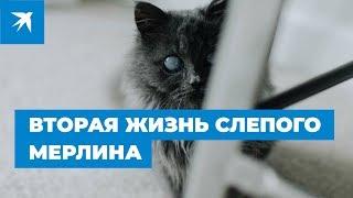Слепой котенок Мерлин погибал на улице, пока его не нашел студент