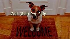 Pet Shipping Brooklyn Ny