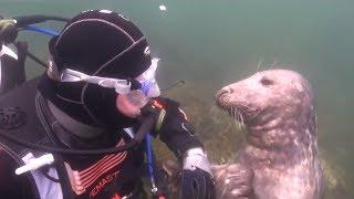 Taucher versteht nicht, was die Robbe von ihm will - dann nimmt das Tier seine Hand...