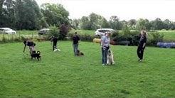 Gehorsam in der Hundeschule (Erweiterter Kurs)