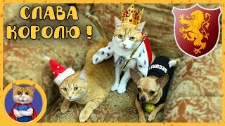 Котик Рыжик - Царь Зверей и Король Королей