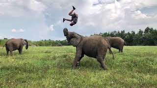 Man Flips in Air With Help of Friendly Elephant - 1011283-2