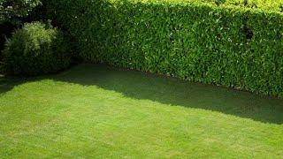 Setos para el jardín - Bricomanía