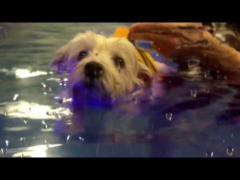 Swimming With Billy at Water 4 Dogs