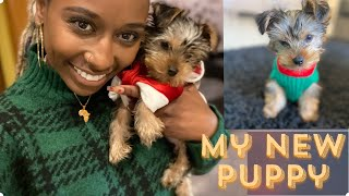 My New Yorkie Pup | How to Potty Train Quickly  | Purchase Story