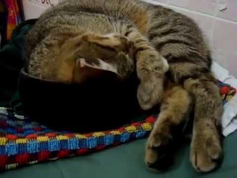 Вопрос: Почему коты, собаки дергаются когда спят?