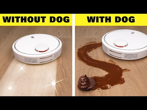 Life With Dog vs Without Dog